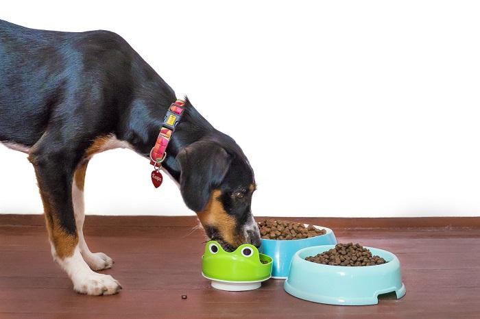 Misky pre psov na raňajky aj večeru